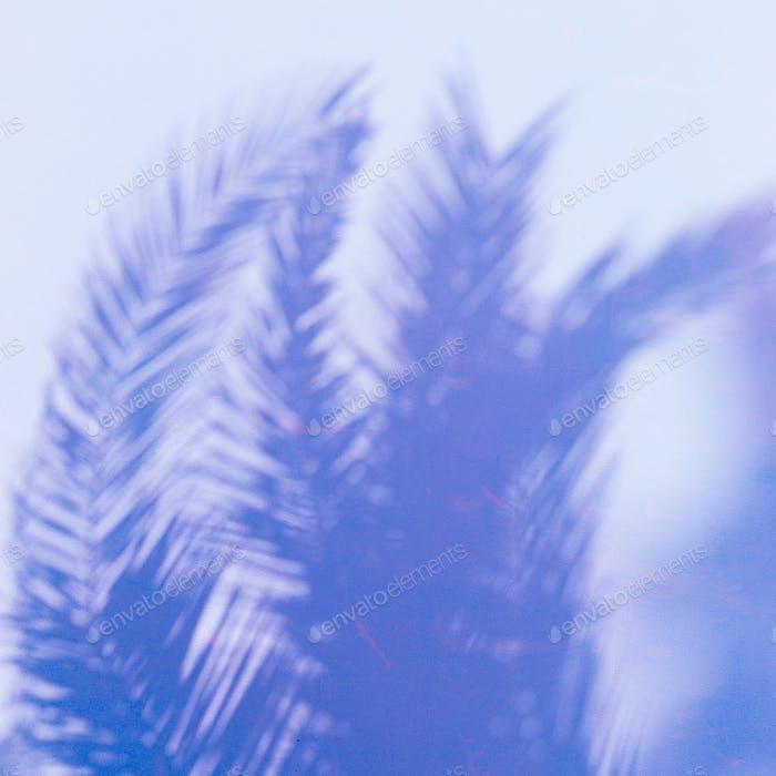 Palm. Tropics. Shadow on the wall. Minimal art