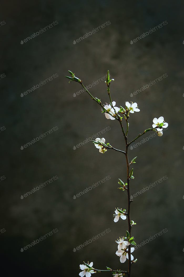 Spring blooming branch
