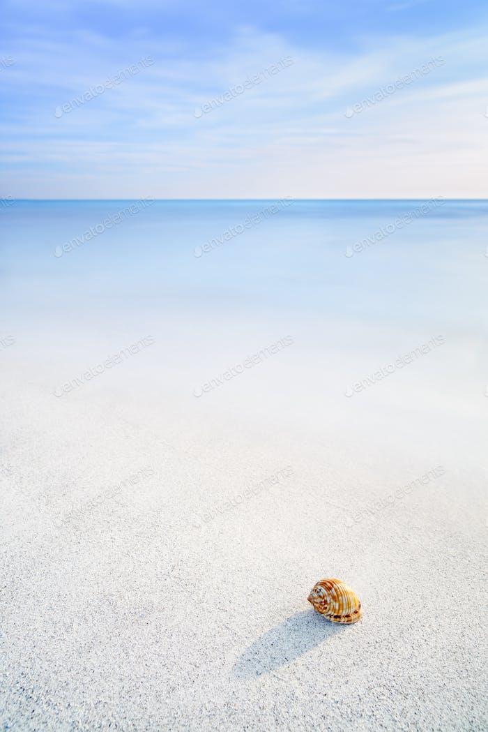 Sea Mollusk Shell in a white tropical beach under blue sky
