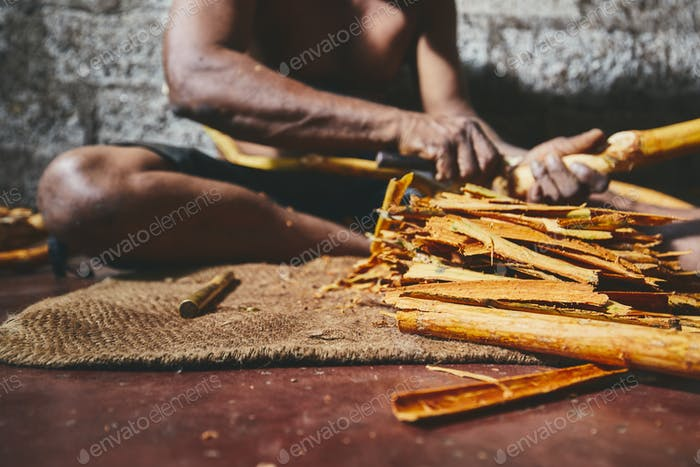 Production of the cinnamon sticks