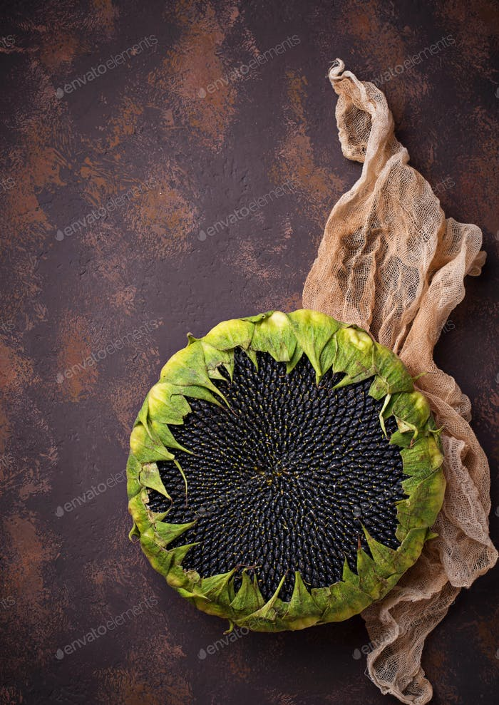 Sonnenblume mit Samen