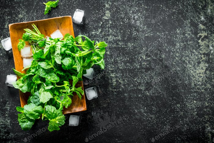 Mint on a wooden plate with pieces of ice.