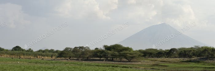 landscape with Ol Doinyo Lengai volcano in background, Tanzania, Africa