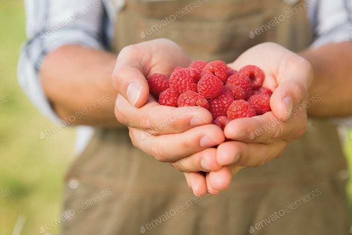 Farmer showing his organic raspberries on a sunny day