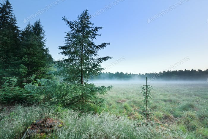 foggy morning on forest meadow
