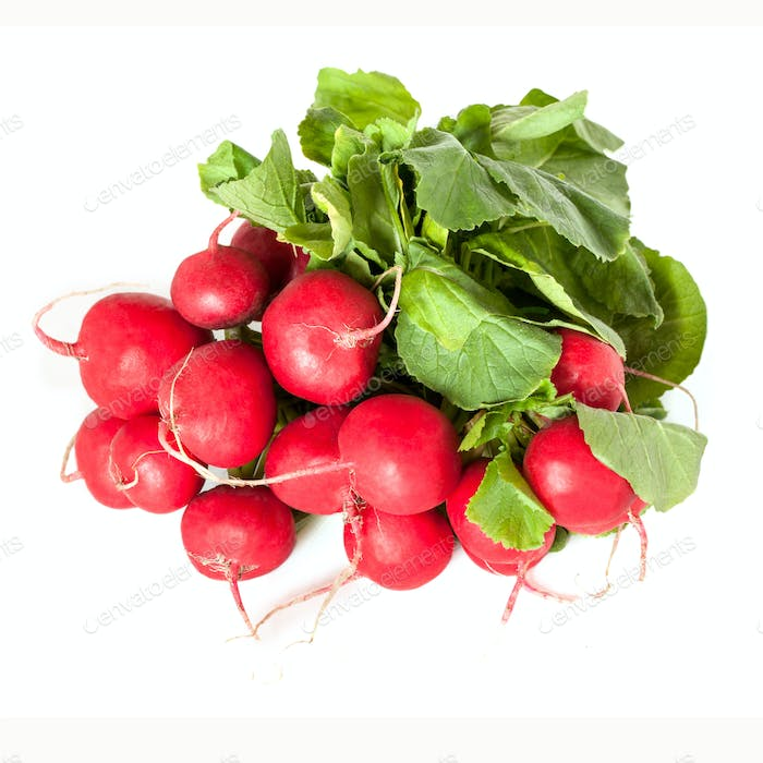 Radishes Isolated
