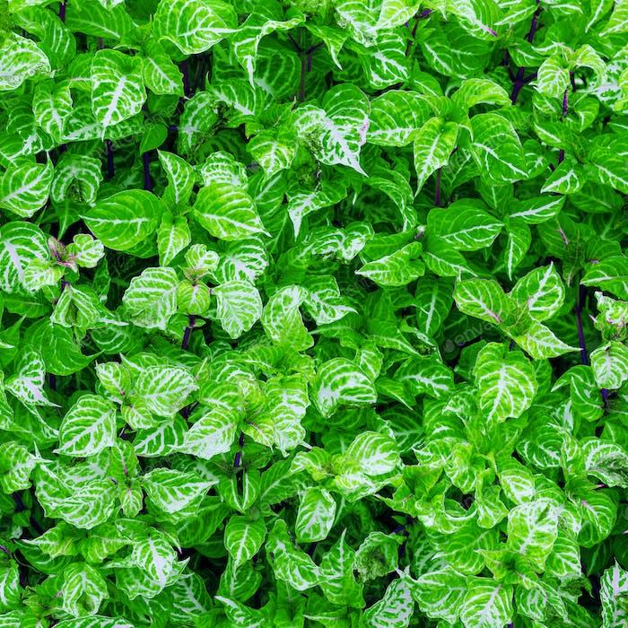 Minimal green background art design fashion idea