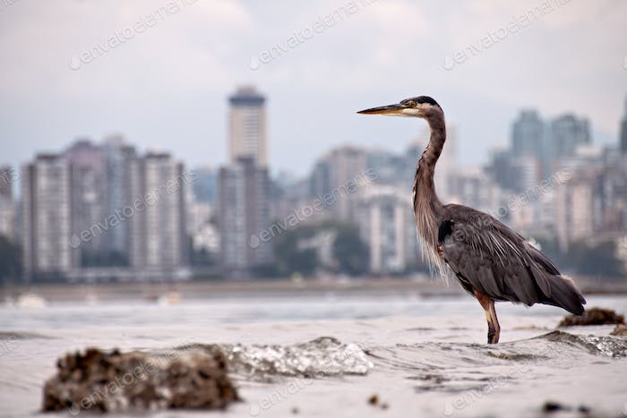 Heron In front of City Skyline