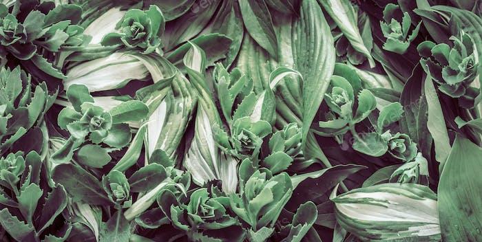 fondo de follaje verde