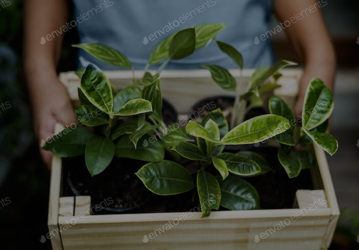 Little Kid Hold Wooden Box of House Plants