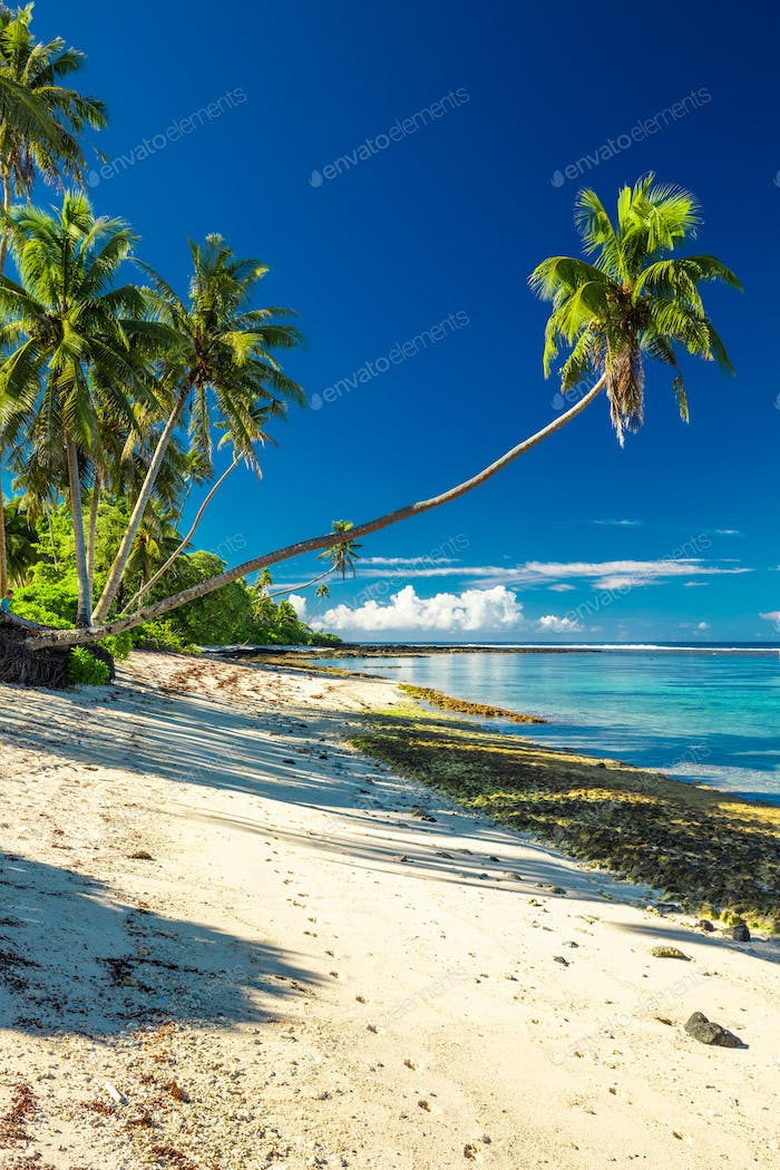 Beach with coral reef on south side of Upolu framed by palm leav