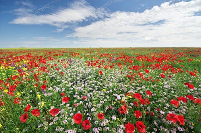 Frühlingsblumen auf der Wiese.