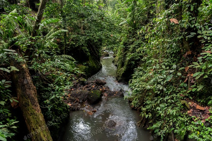 Tropical river between undergrowth in Ubud, Bali