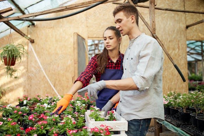 Guy und Mädchen Gärtner wählen Töpfe mit Blumensetzlingen im Gewächshaus an einem sonnigen Tag