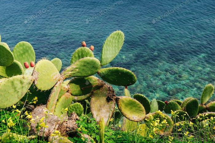 Thorny cactus near the sea