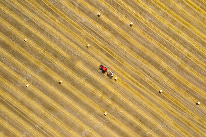 Aerial view of haymaking processed into round bales. Red tractor works in the field.