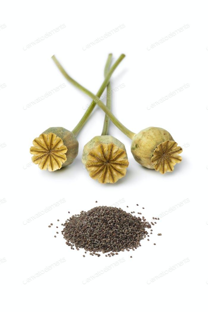 Dried Poppy heads with poppy seed