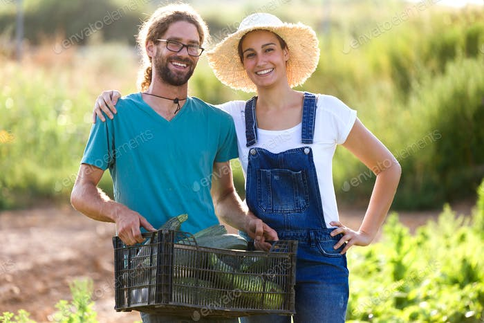 Horticulturist young couple harvesting fresh vegetables in the g