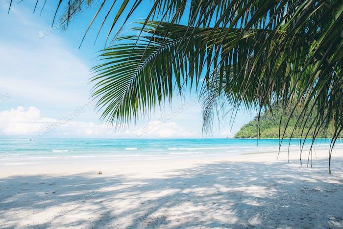 Coconut leaves on beach