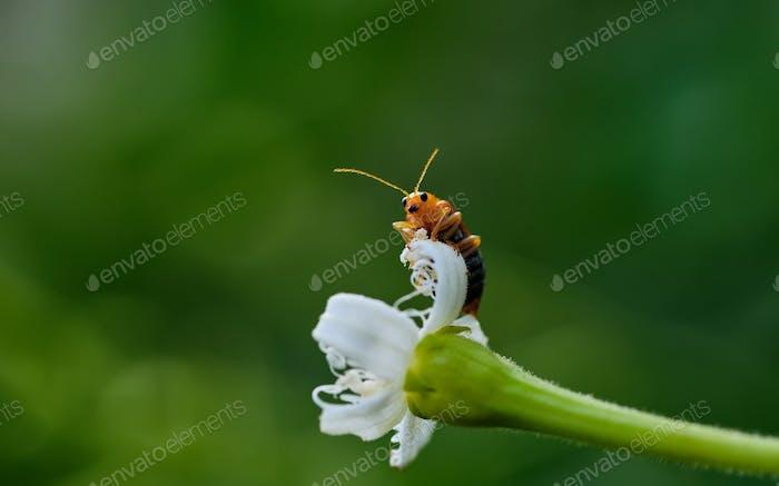 A little orange bug on a plant part