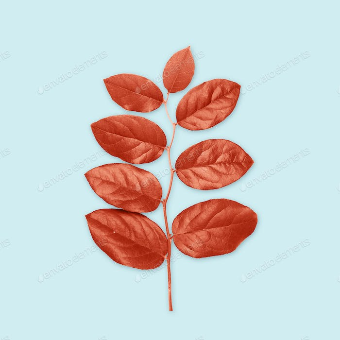 red leaves on blue background