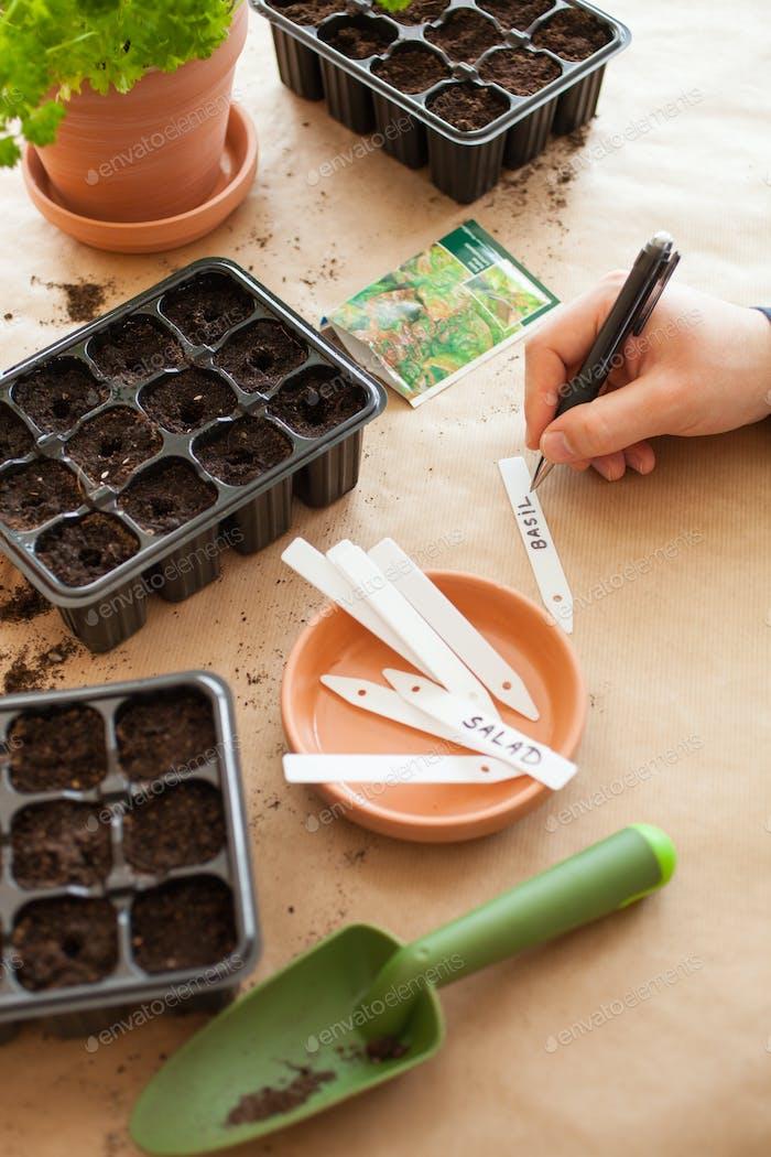 Gartenarbeit, Pflanzung zu Hause. Mann Saat Samen in Keimbox