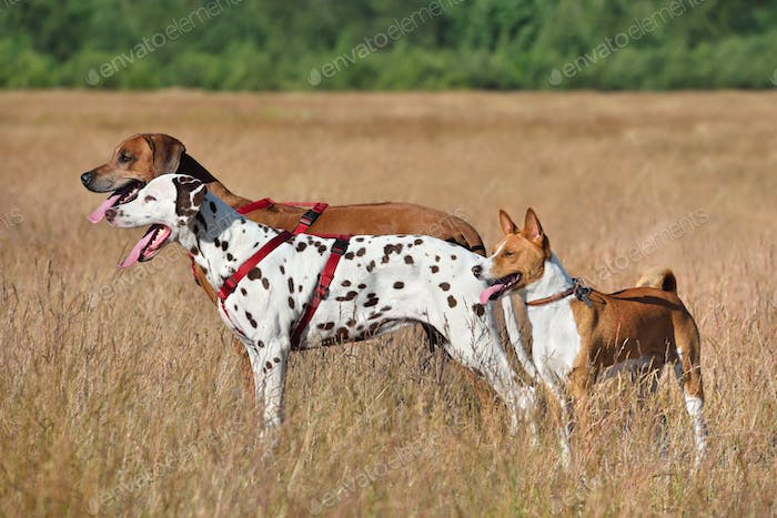 Three dogs on a field