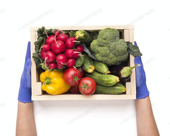 Woman in gloves holding wooden box with organic vegetables
