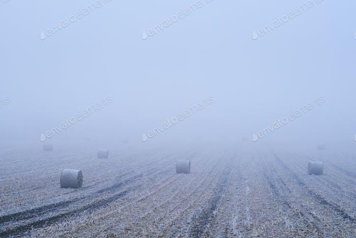 Straw bales on winter field