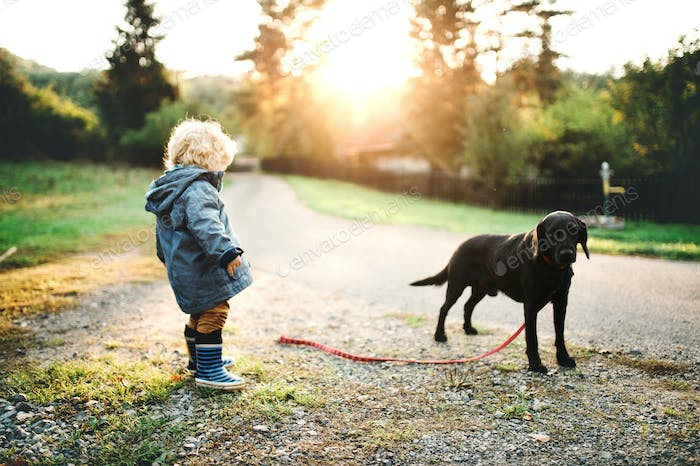 A little toddler boy and a dog outdoors on a road at sunset.