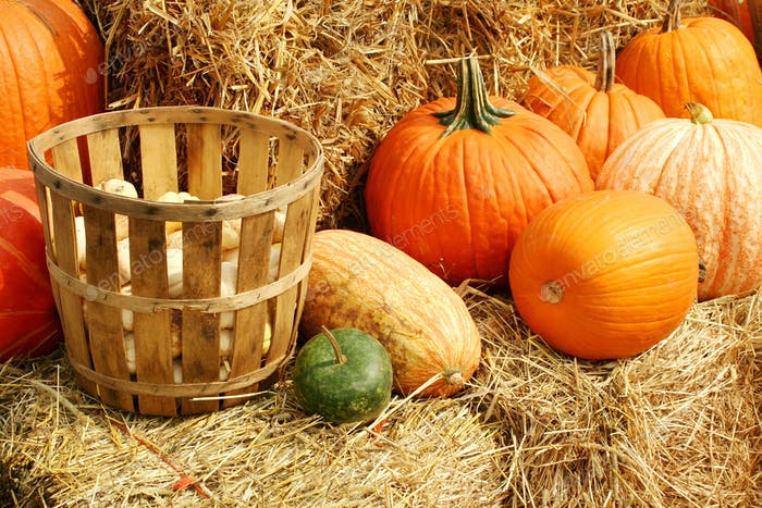 Pumpkins and gourds in a basket