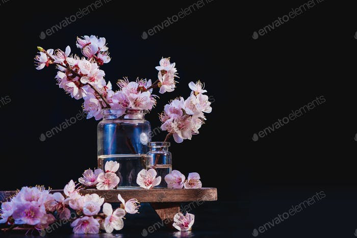Cherry blossom header minimalist still life. Pink flowers, spring bloom concept on a black