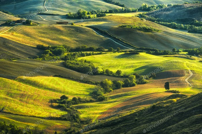 Tuscany, rolling hills on misty sunset. Rural landscape. Green f