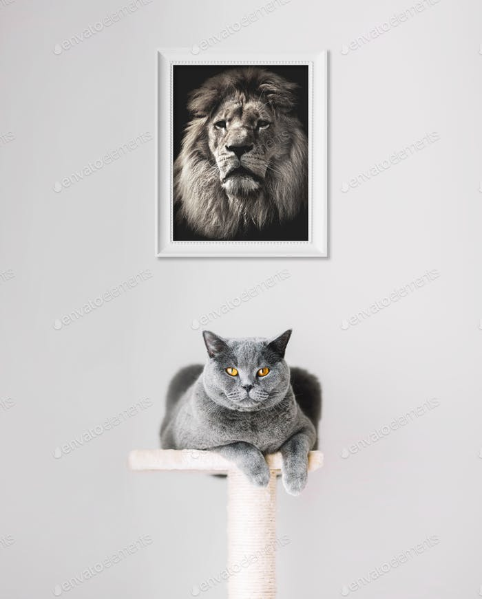 British Shorthair cat and lion portrait above.