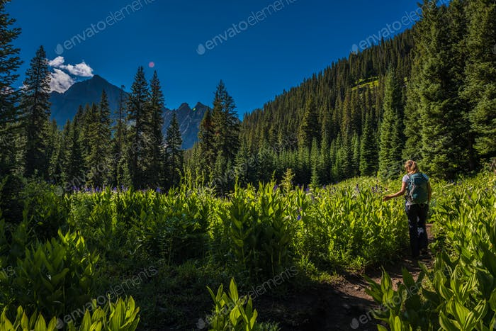 Hiker on a Blue Lakes Trail looks at Wild Flowers