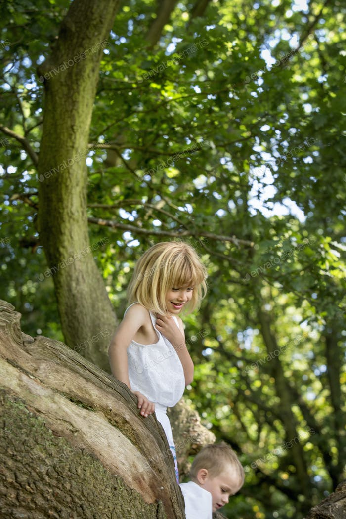 Young boy and girl climbing a tree in a forest.