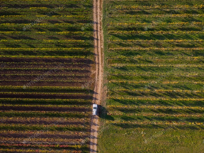 Off rad car drives rural road in vineyards, aerial from above