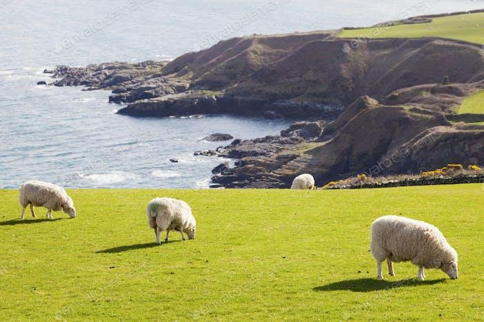 Frühlingspanorama von Isle of Man