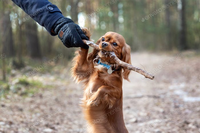 Puppy playing with the stick
