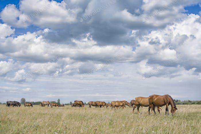 horses grazes