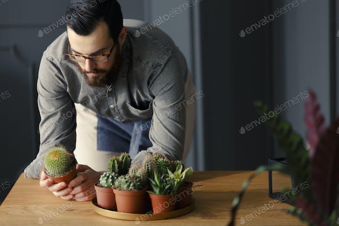 Gärtner hält Kaktus neben Platte mit Sukkulenten während der Arbeit