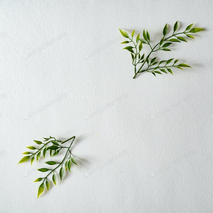 Spring composition. Creative layout made of green leaves and branches on white background.