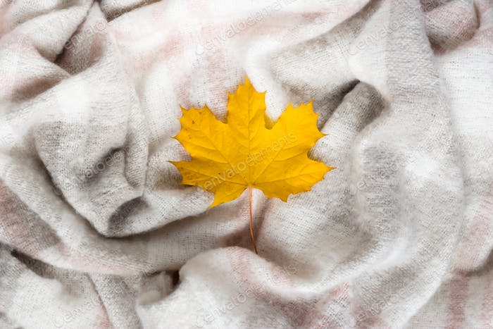 Autumn maple leaf on crumpled gray wool blanket. Soft and warm fabric crumpled in folds. Texture