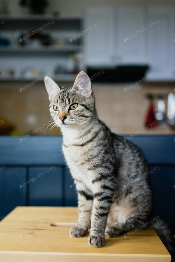 Cute young cat sitting