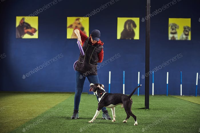Professional handler working with an American Staffordshire Terrier