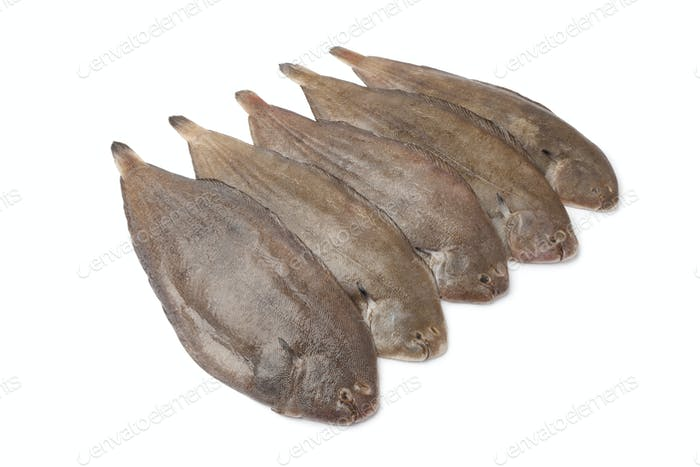 Fresh sole fishes