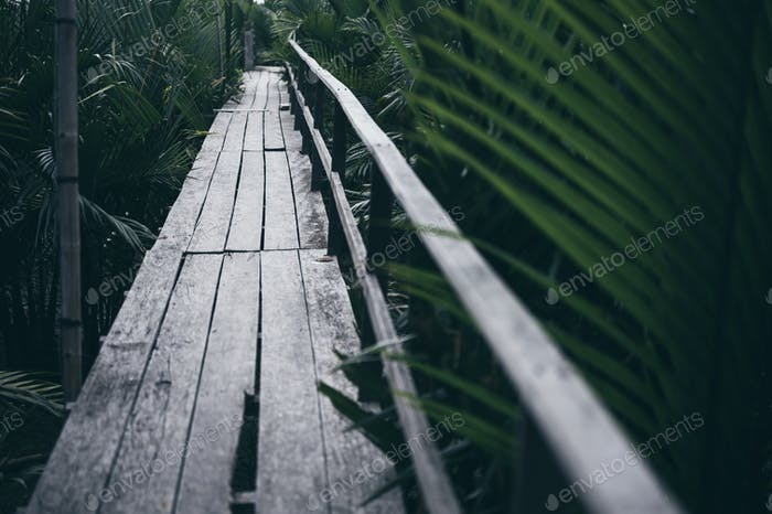 Wooden walk way in mangrove forest, Feel the nature, fresh and relax