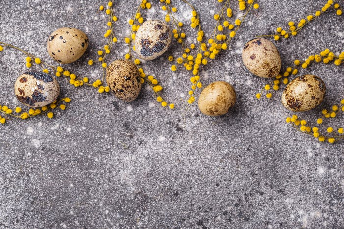 Quail eggs and mimosa flowers