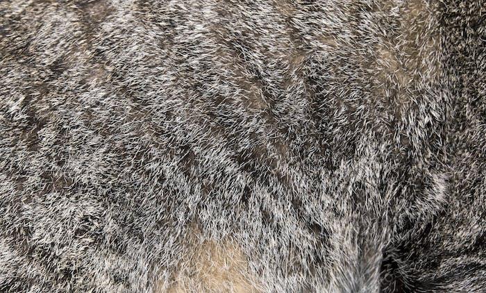Close up cat hair