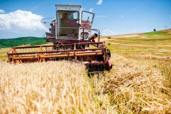 industrial harvesting combine harvesting wheat